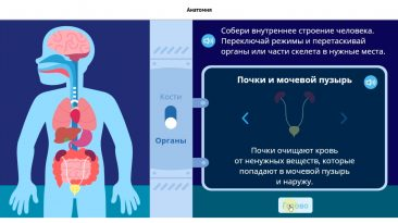 Анатомия Учи.ру