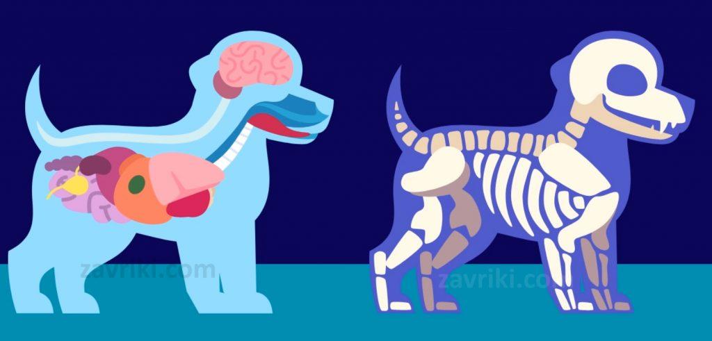 Анатомия (Окружающий мир олимпиада Учи.ру)